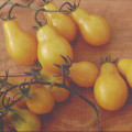 Yellow Pear Tomato from Territorial Seed Co.