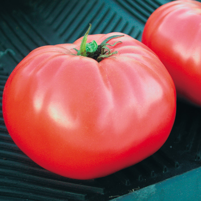 Brandywine Tomato from Territorial Seed Co