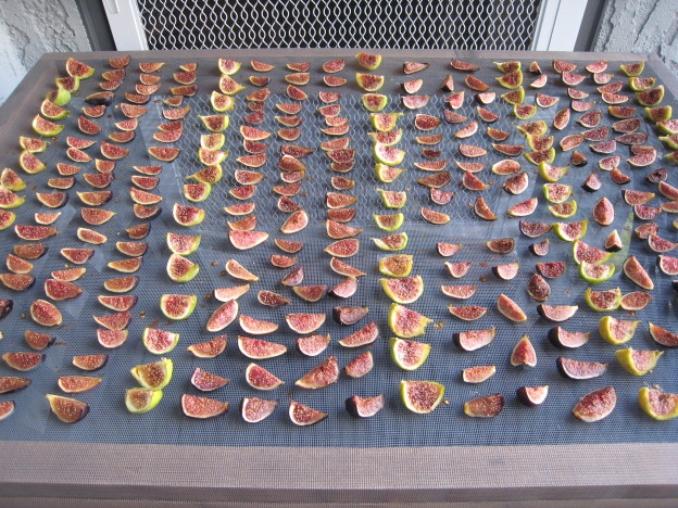 Figs cut & laid out for drying outside.