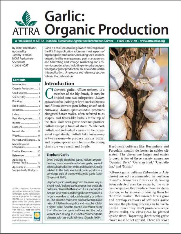 Garlic: Organic Production