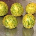 Green Zebra tomatoes from 2014 harvest