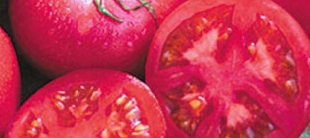 Bountiful Gardens - Eva Purple Ball Tomato