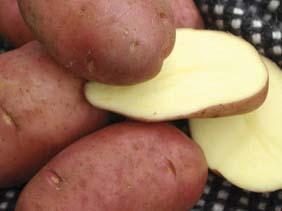Territorial Seed Co: Desiree Potato