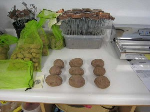 2.5 lbs Mountain Rose seed potatoes; each bag to the left also holds 2.5 lbs of seed potatoes