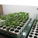 2010 Seed Starting